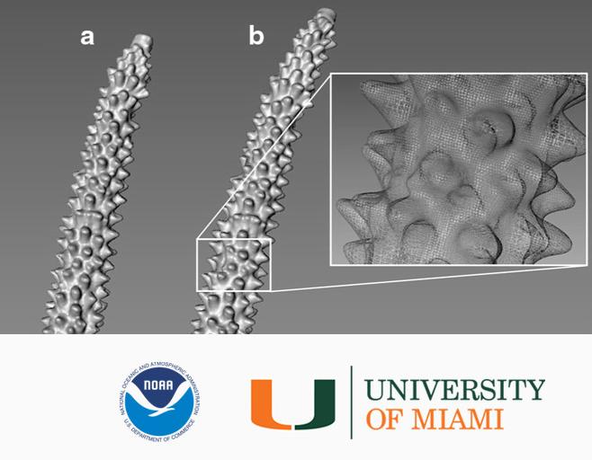 サンゴの成長率測定